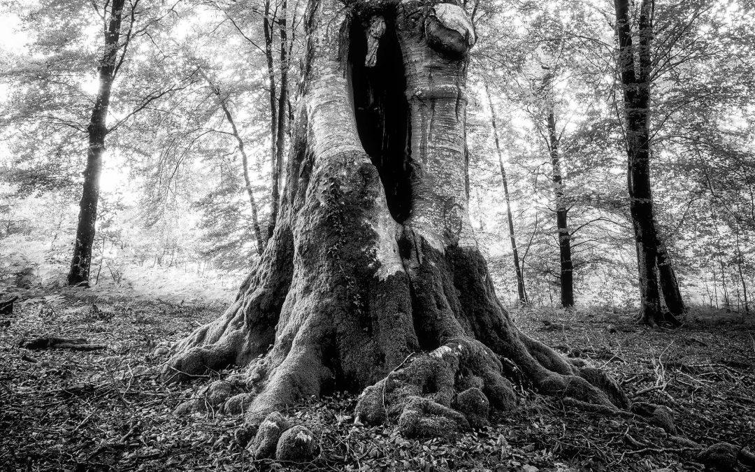 Trees | Domaine des Étangs