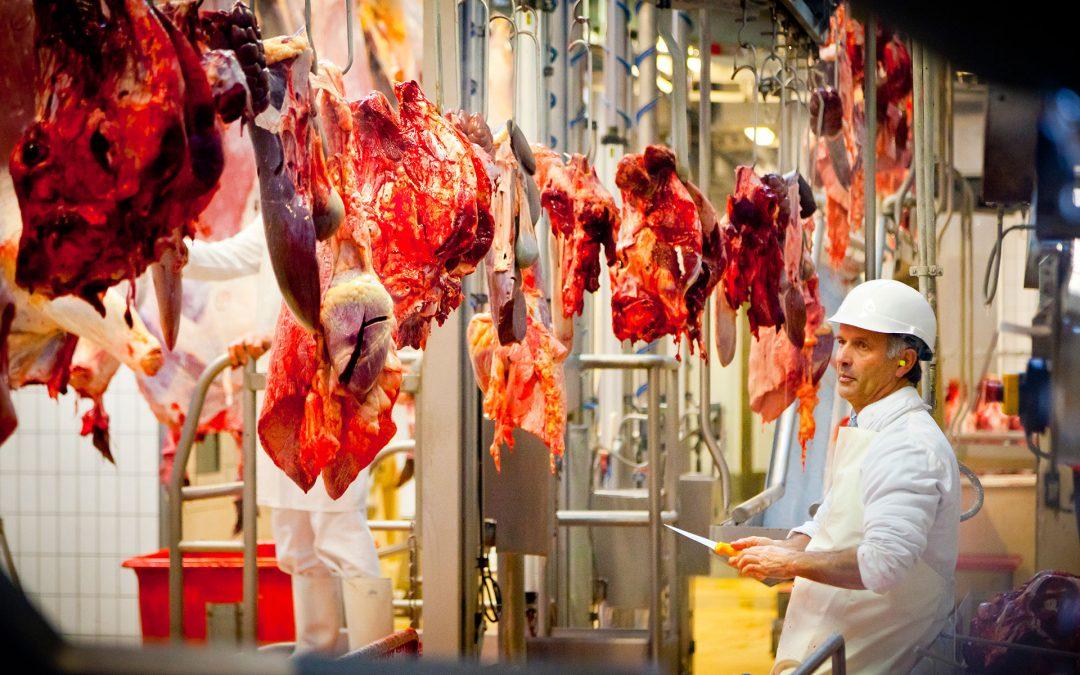 Aïd el-kebir à l'abattoir de Bordeaux